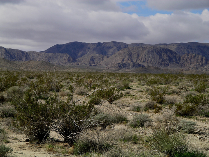 A flat desert floor covered in small shrubby plants with mountains rising up in the background.